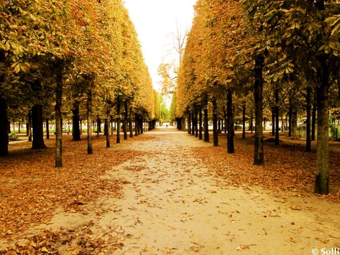 jardin_de_tuilerie1